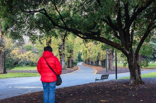 도시 공원, 숲길, 오솔길, 정원의 무료 스톡 사진