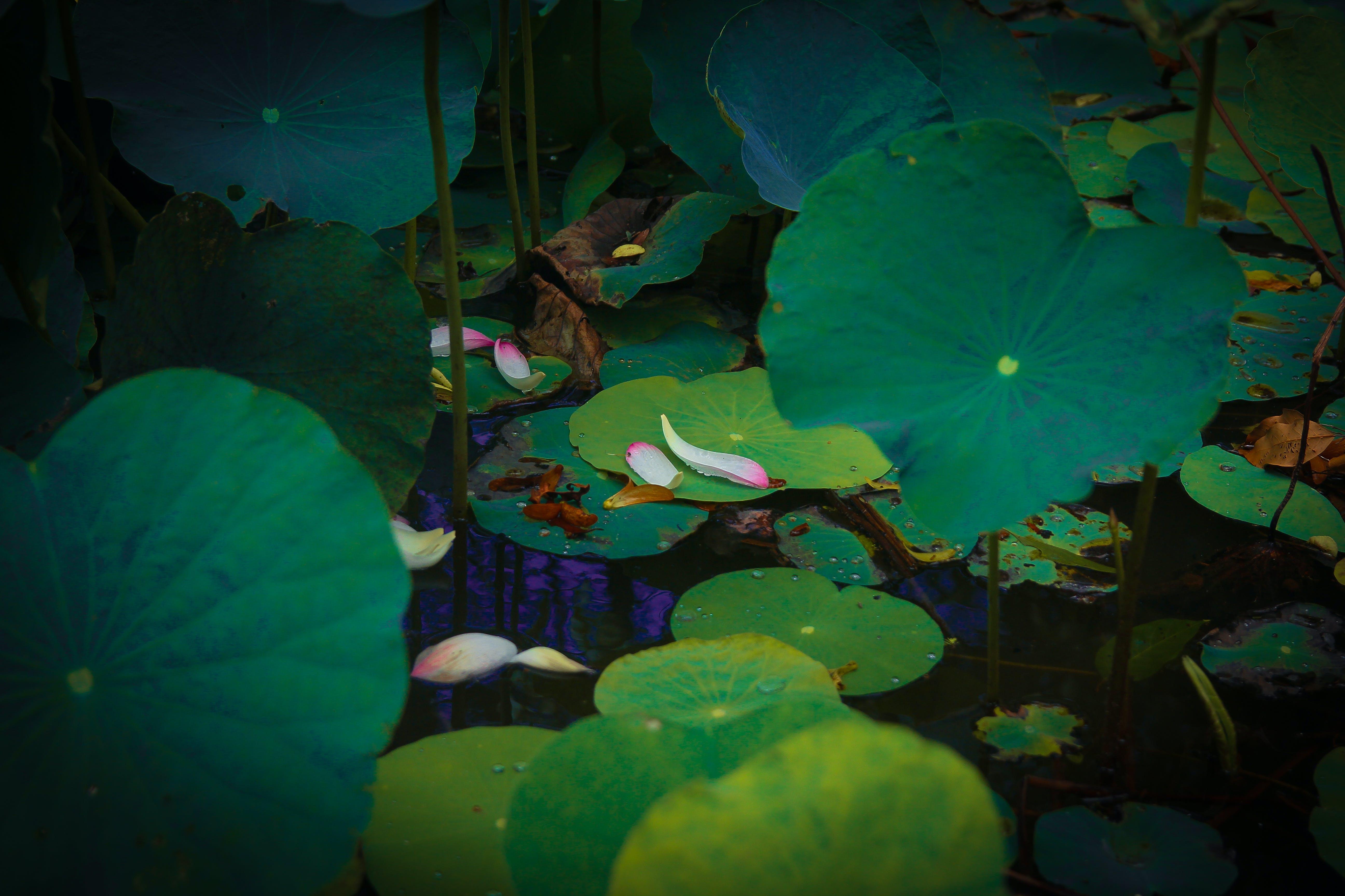 Základová fotografie zdarma na téma rostliny, venkovní, vodní rostlina