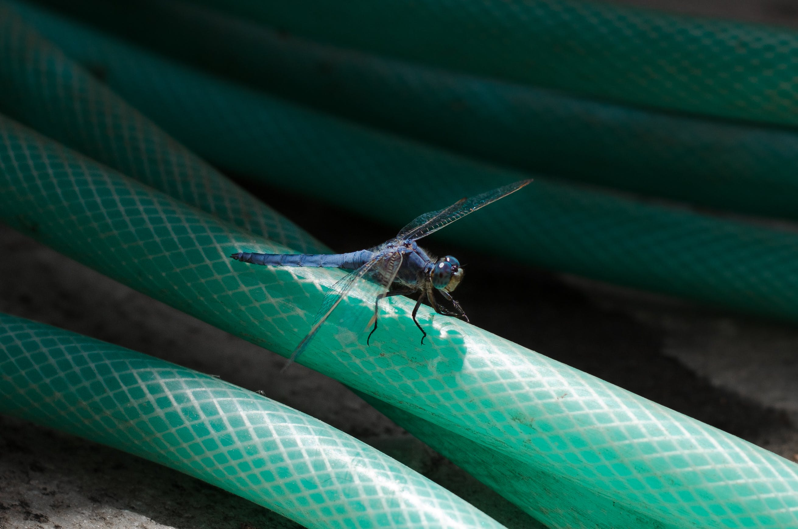 Free stock photo of insect, insects, nature