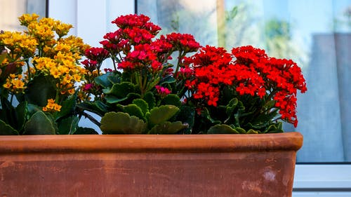 Foto profissional grátis de flores, planta, ventana