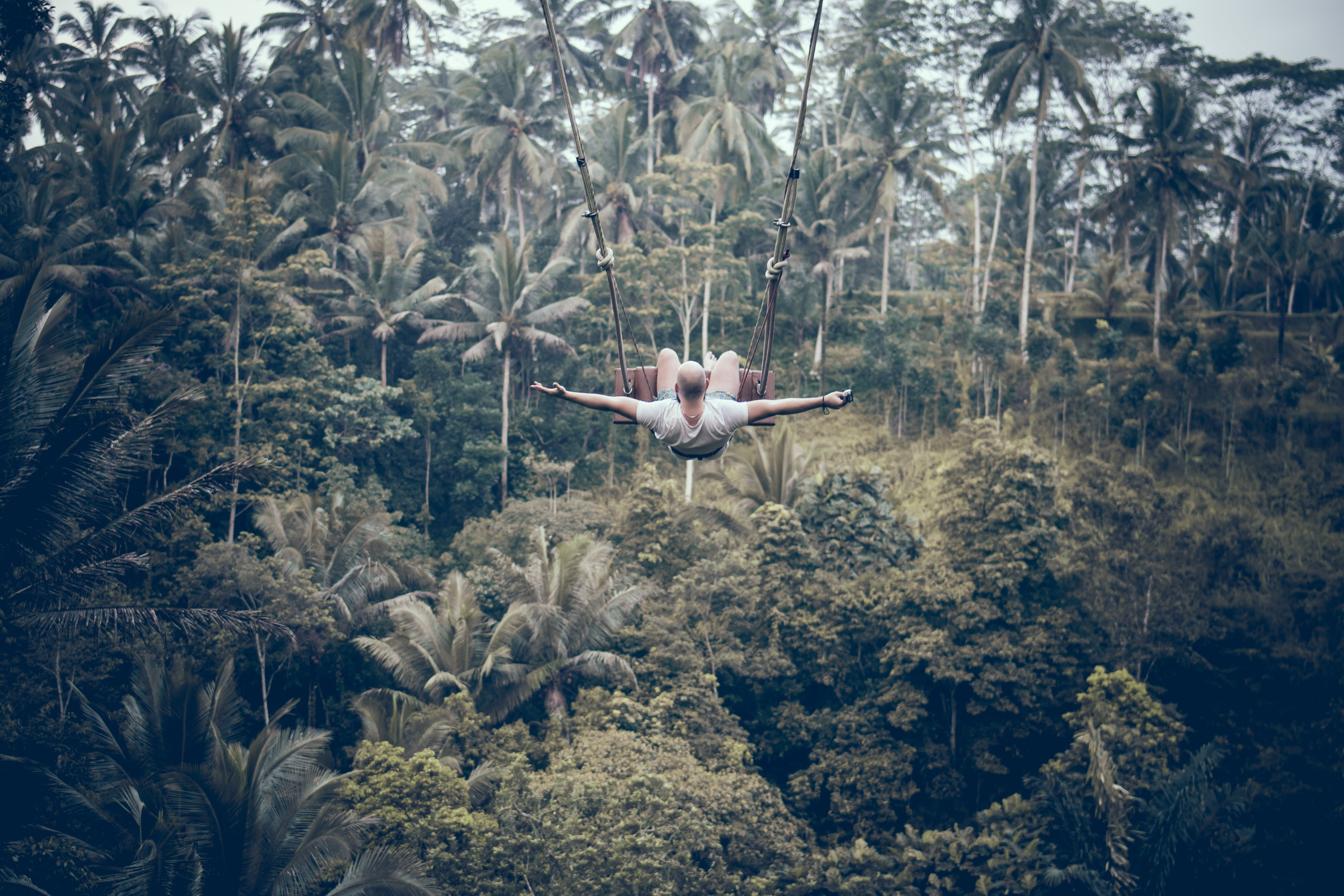 Man Using the Zip-lining on Top of Palm Trees