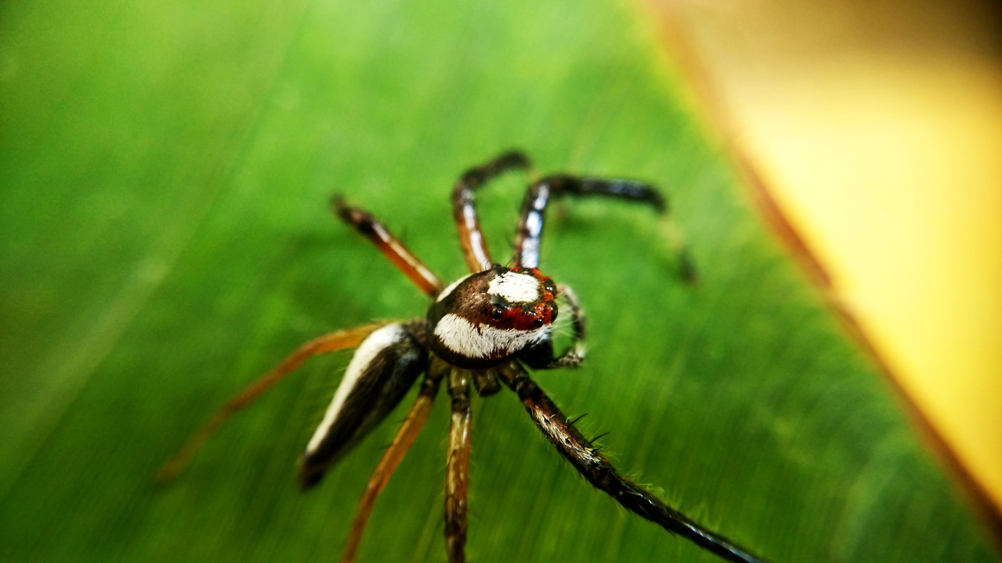 Free stock photo of green, spider, spider's web, spiderman