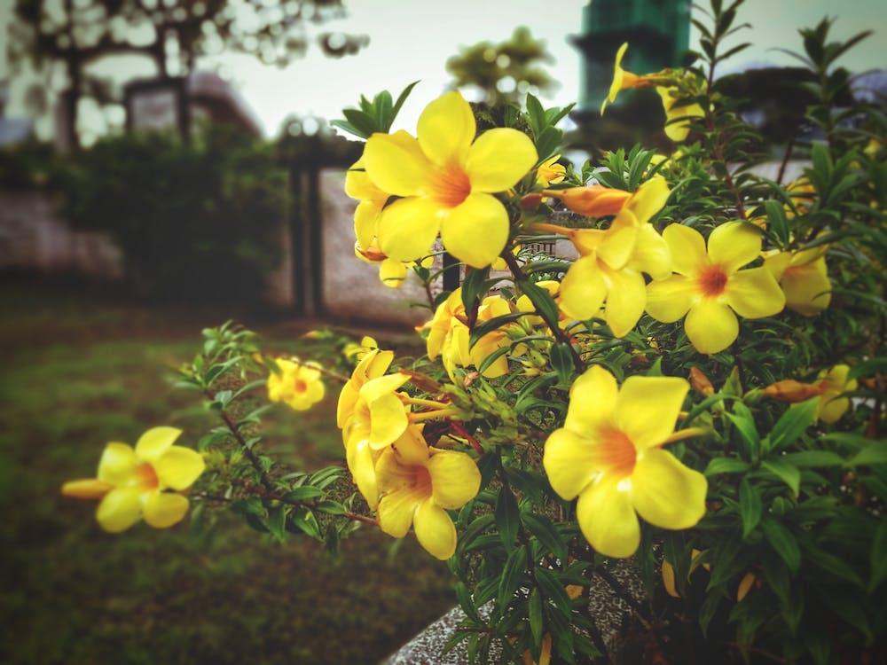 желтые цветы, желтый, красивые цветы