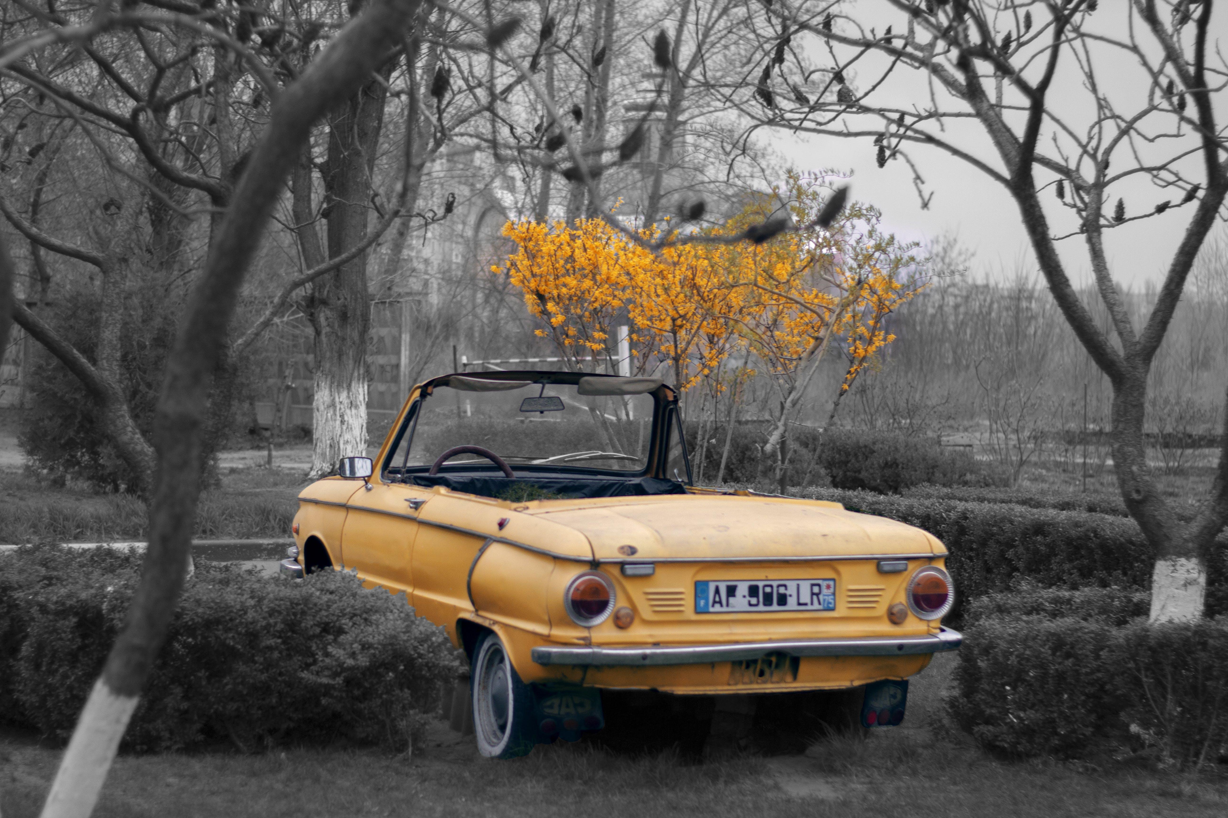 Free stock photo of #mobilechallenge, #Tree, auto, beautiful