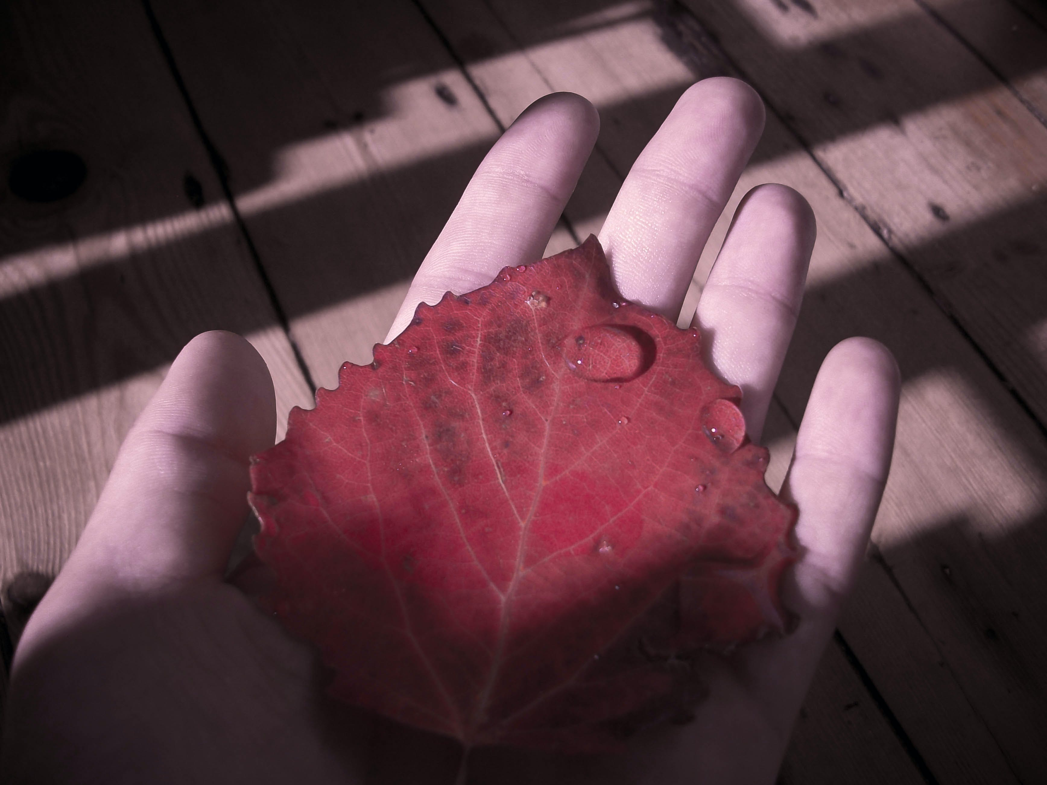 Free stock photo of #autumn, #fall, #law