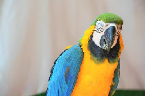 Free stock photo of beautiful, color, macaw, parrot