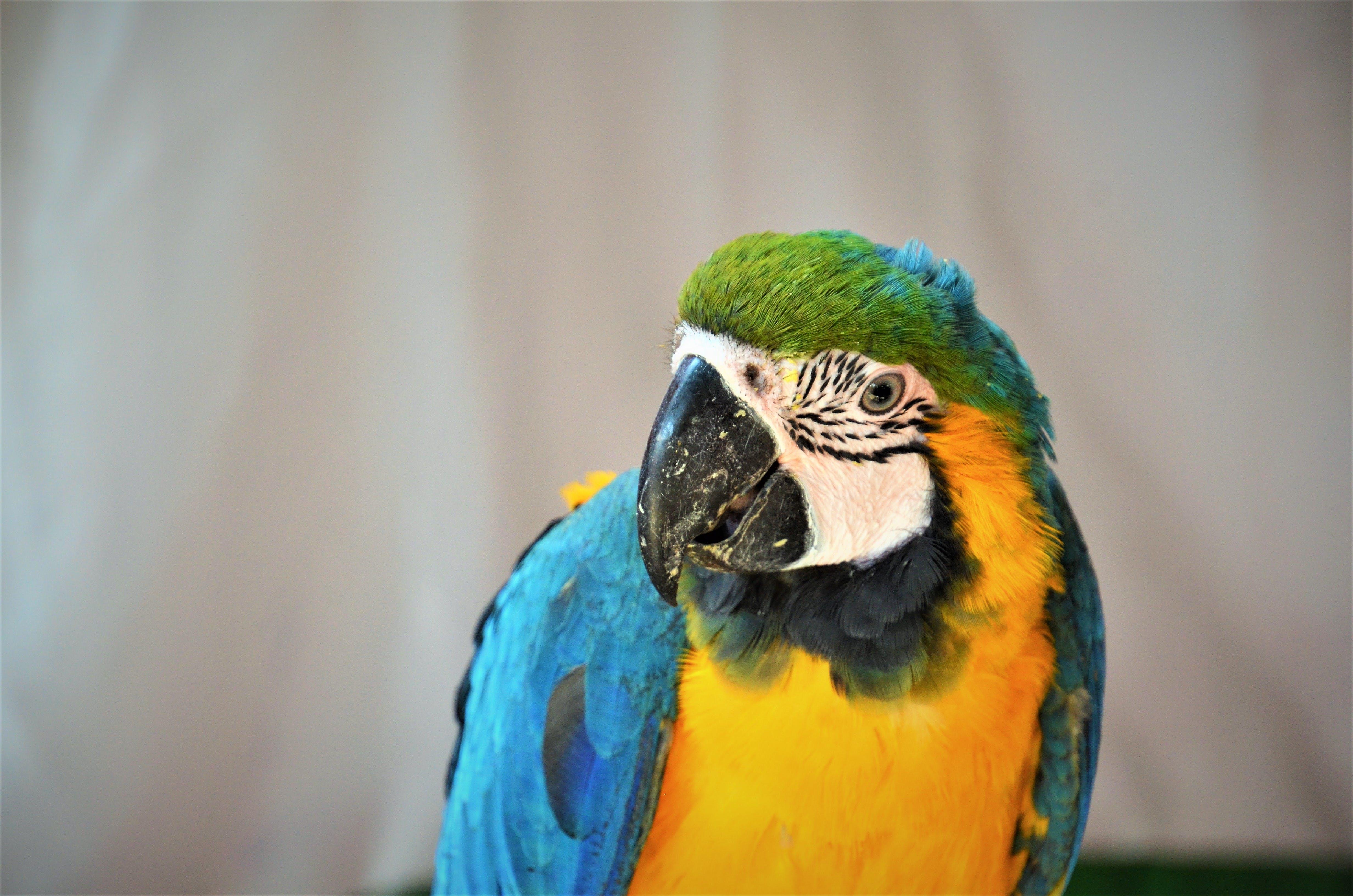 Free stock photo of beautiful, bird, color, macaw