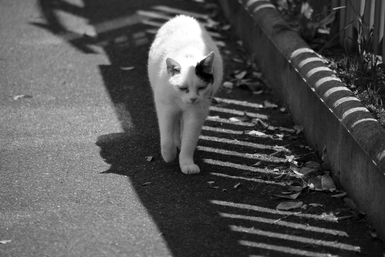 Δωρεάν στοκ φωτογραφιών με ombre, urbain, ζώο de compagnie, κουβέντα