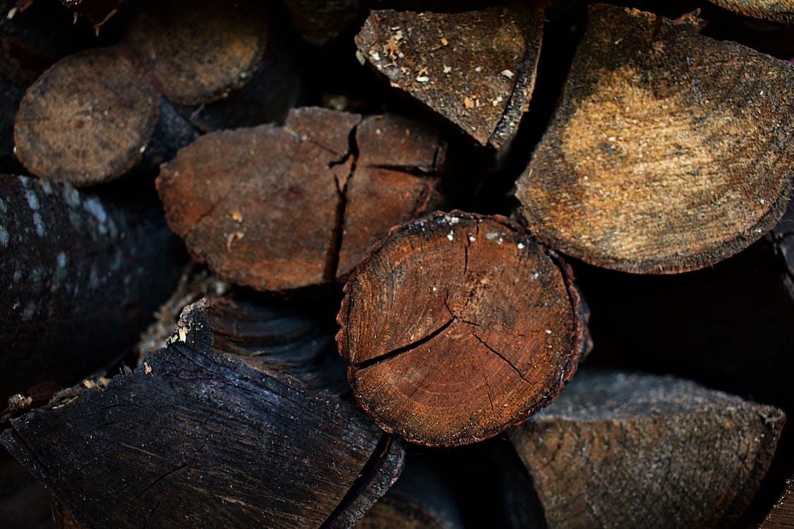 abbaiare, boschi, catasta di legna