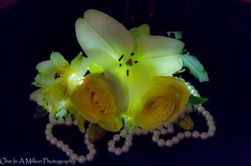 Darmowe zdjęcie z galerii z artystyczny, kwiat, perły