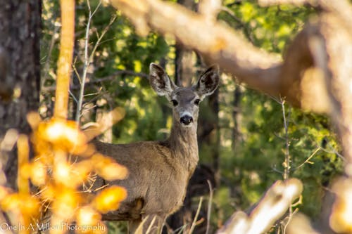 Darmowe zdjęcie z galerii z jeleń, las, natura