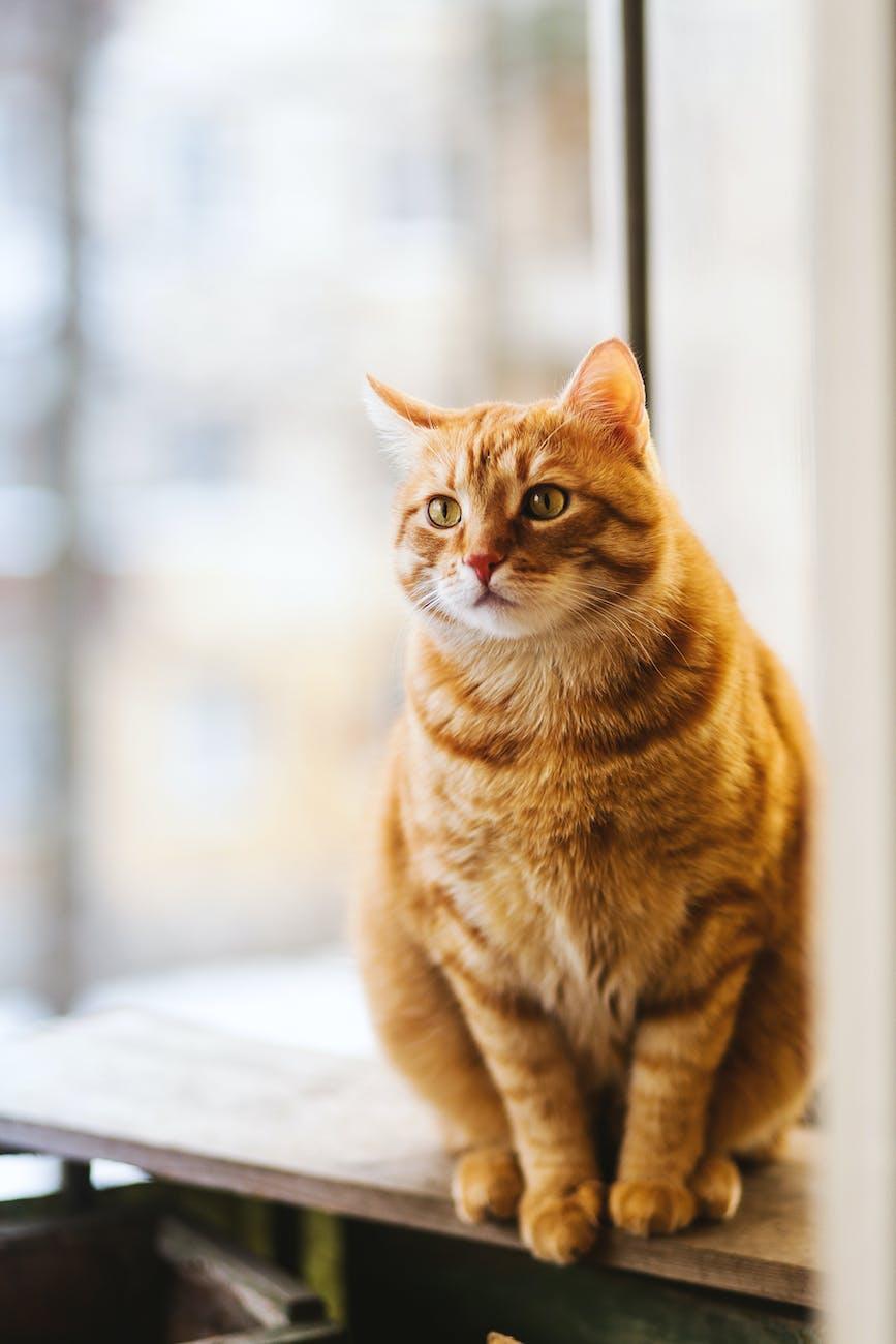 У Львові підрахували всіх котів міста