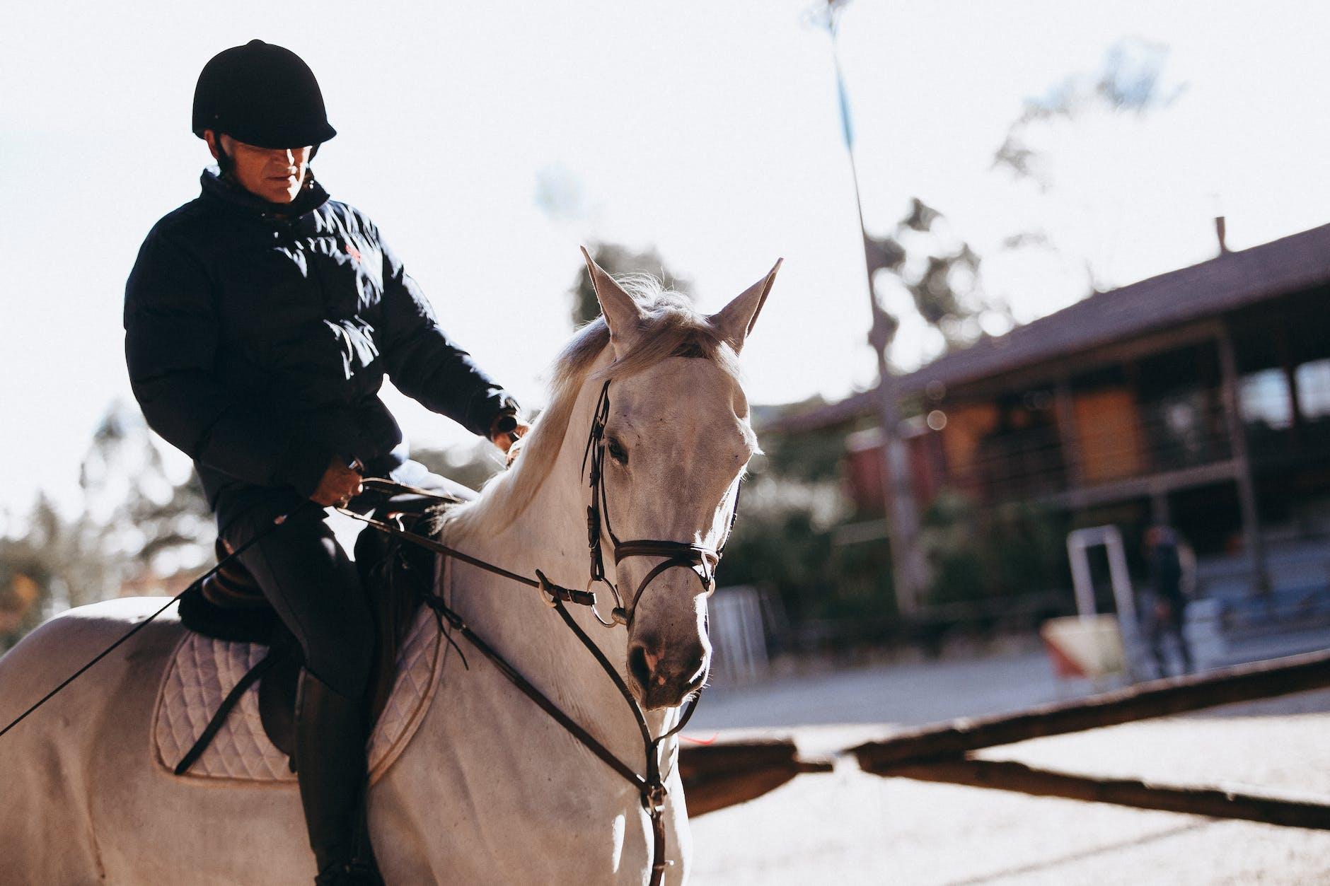 Mann, Der Auf Pferd Reitet · Kostenloses Stock Foto