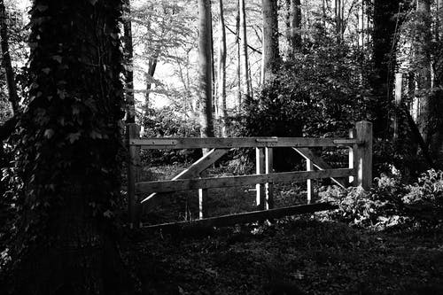 Grayscale Photography of Wooden Gate Surrounded by Trees