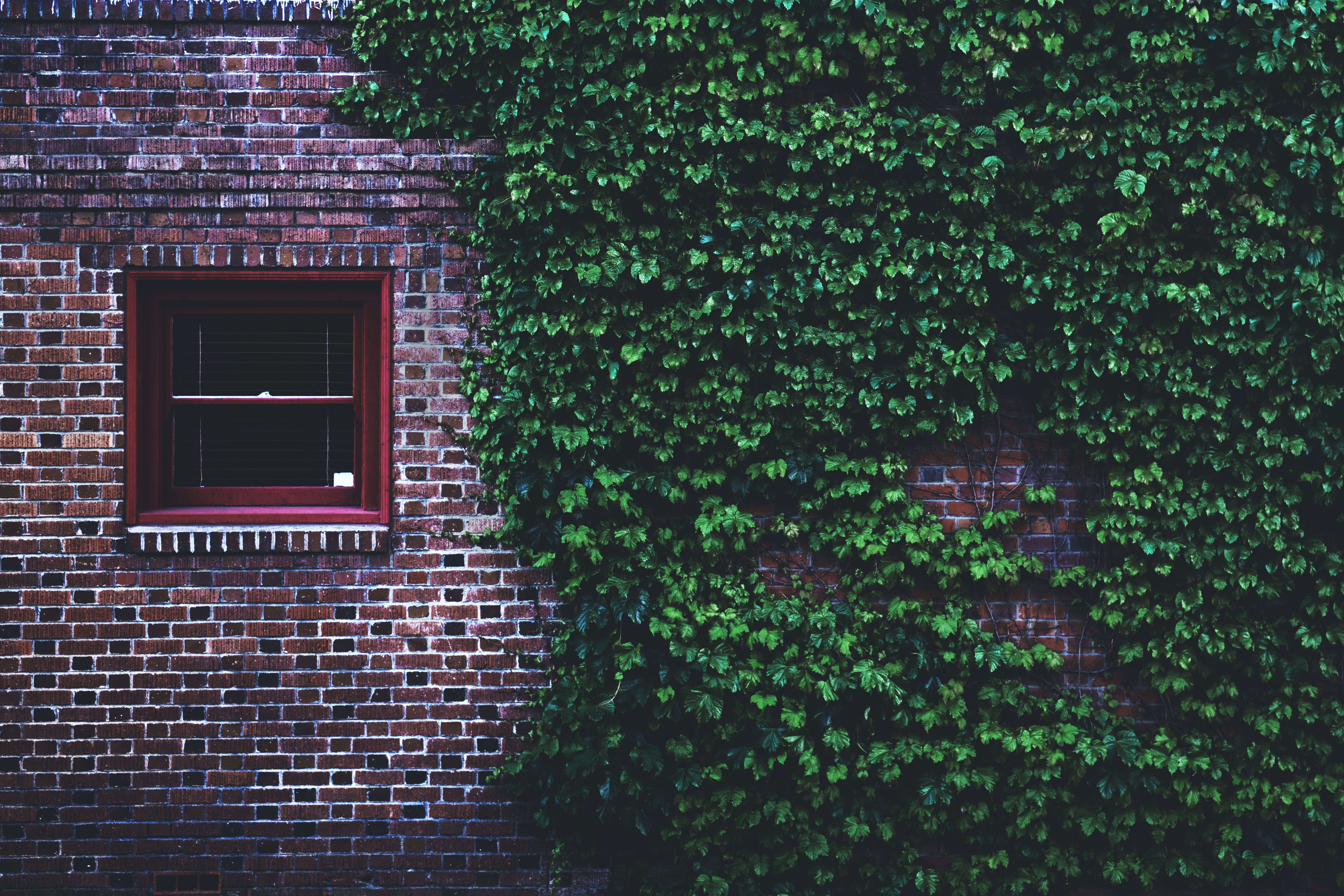 Brown Concrete Brick House Covered by Green Leaf Vines