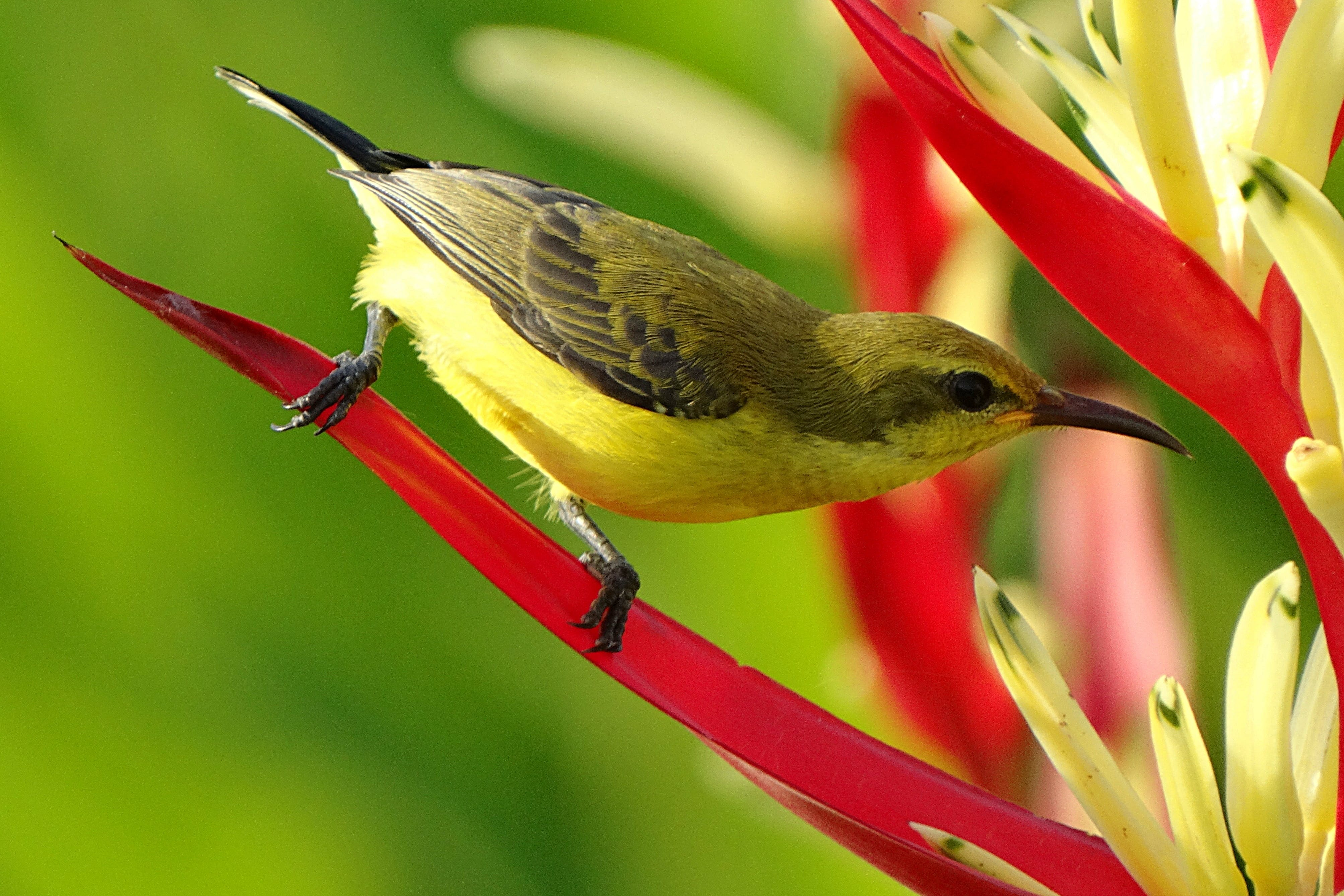 Selective Focus Photography of Black Green and Yellow Long Beaked Bird