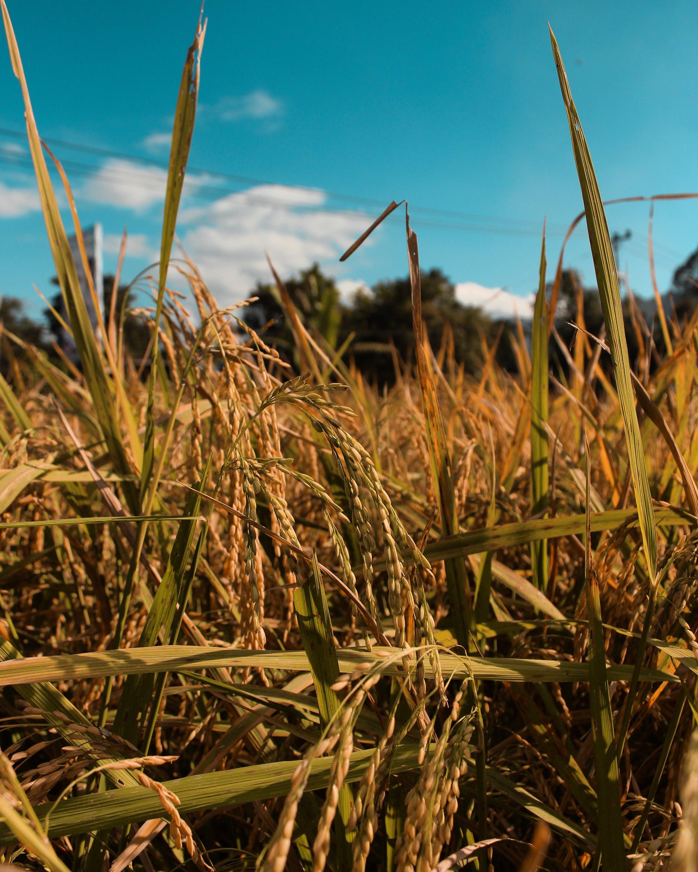 Free stock photo of #nature #folk #plain