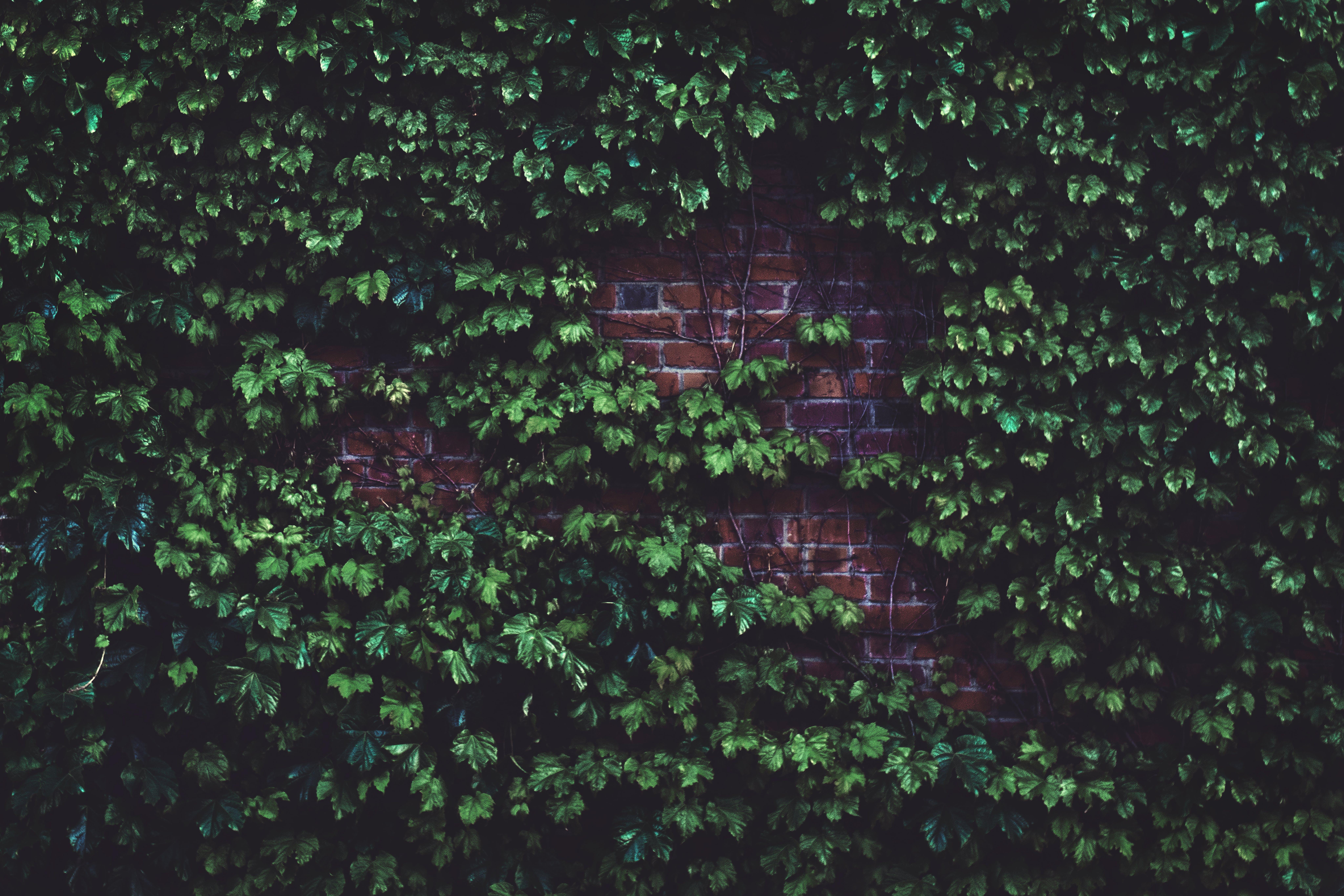 Green Plants in Wall Bricks at Daytime