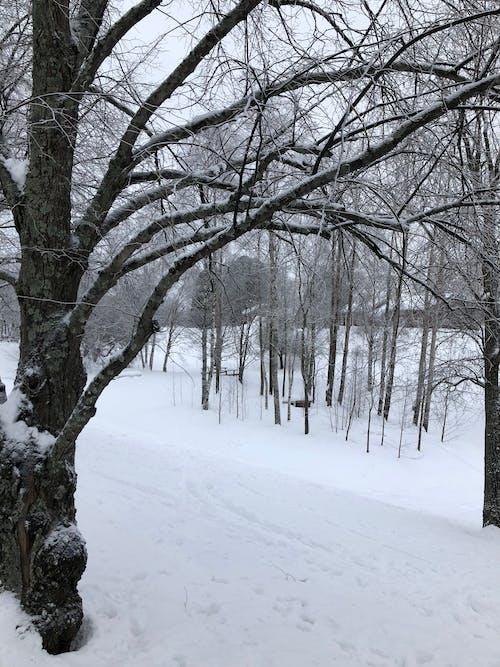 kış içeren Ücretsiz stok fotoğraf