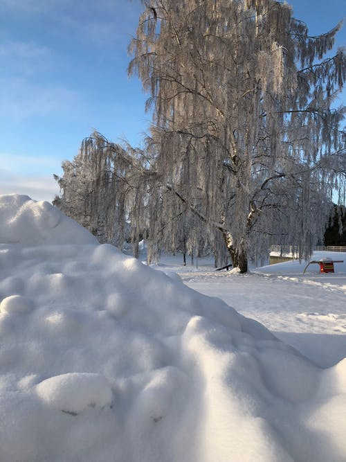 Foto d'estoc gratuïta de hivern
