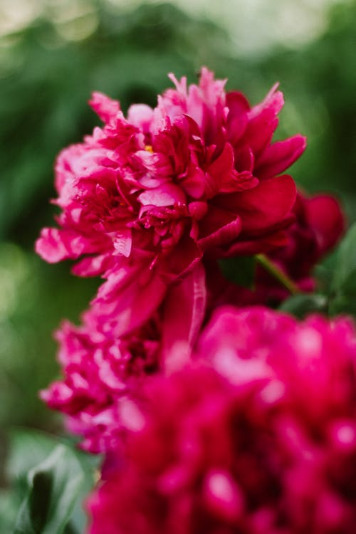 Immagine gratuita di fiori, natura