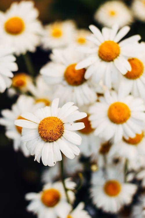 夏天, 季節, 微妙, 明亮 的 免費圖庫相片