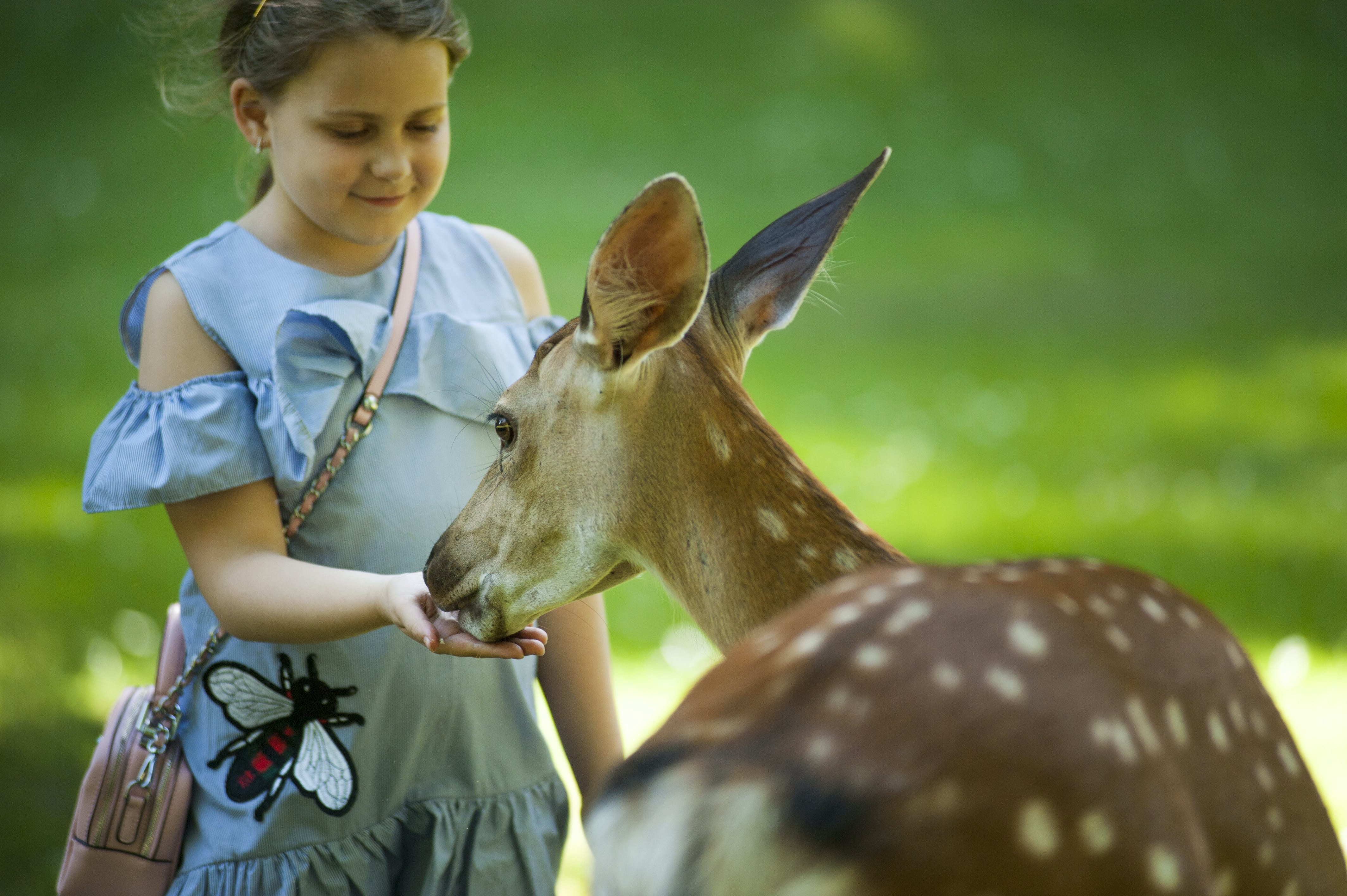 Kid Feeding Antelope