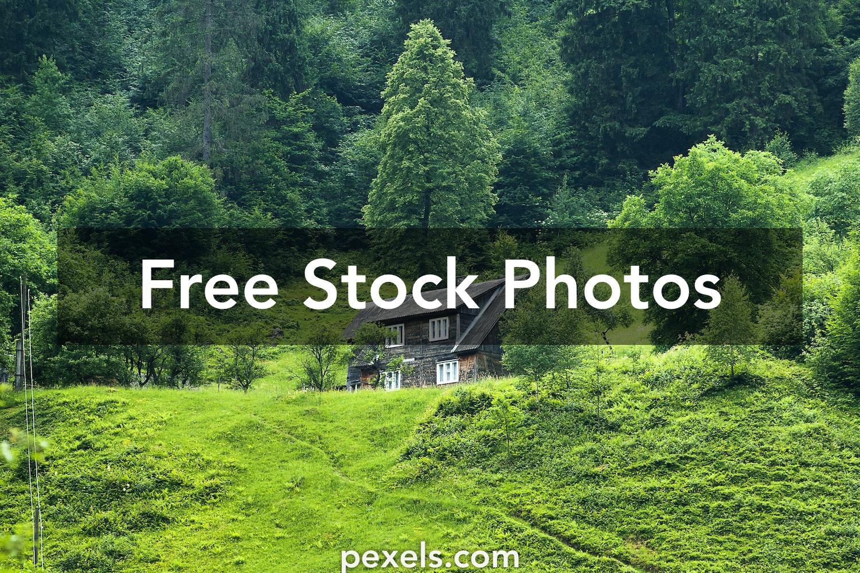 1000 Beautiful Green Nature Photos Pexels Free Stock Photos