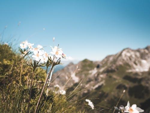 Foto stok gratis bagus, bunga-bunga, flora, kelopak