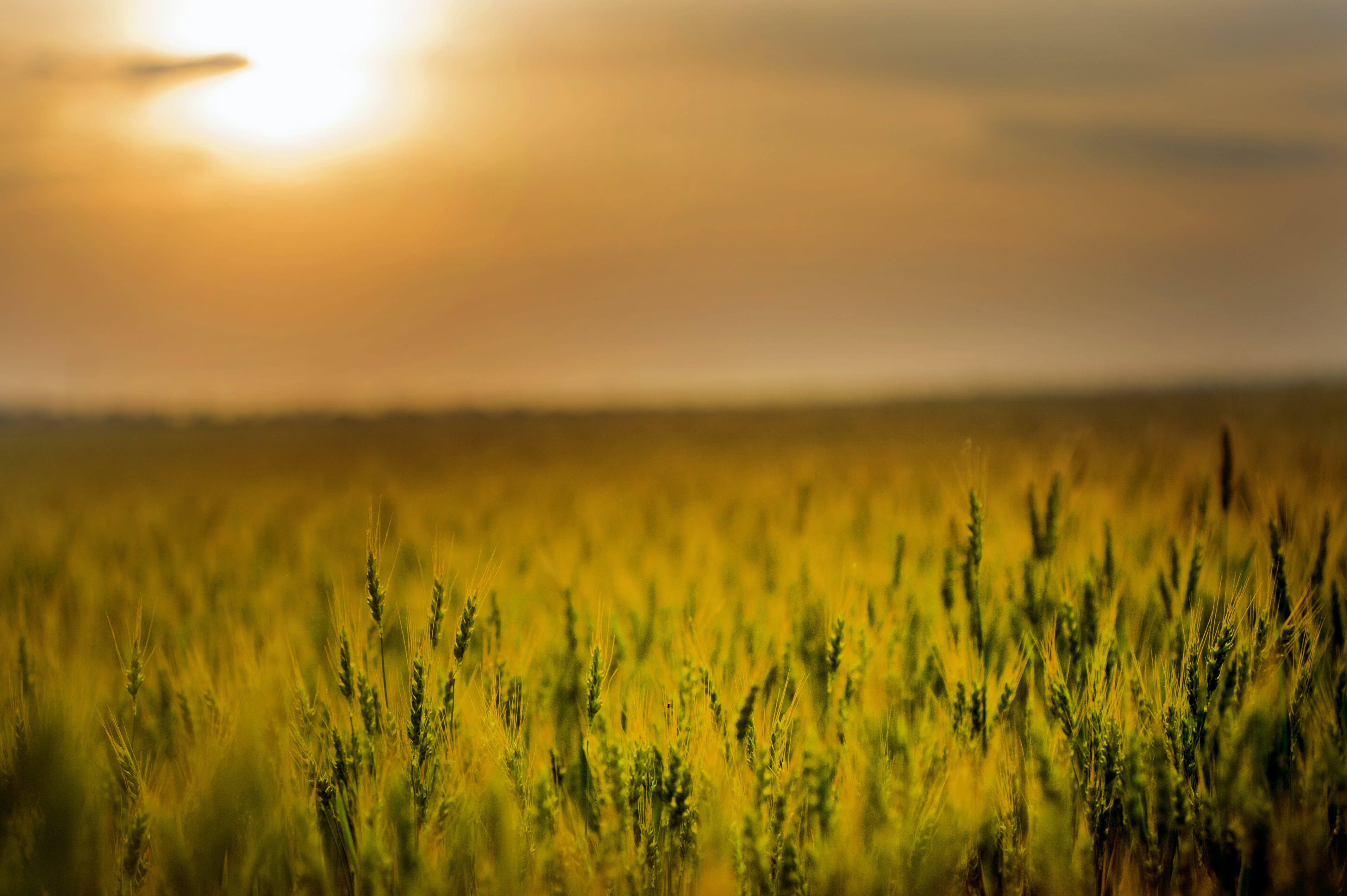 Green Field during Sunset