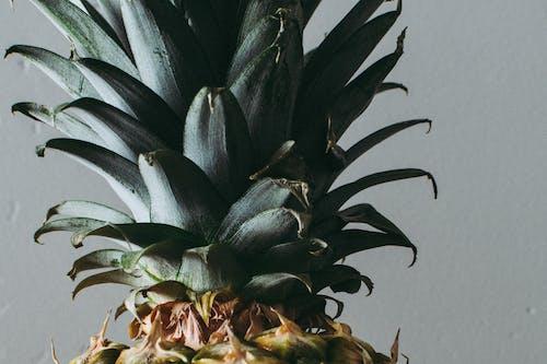 Kostnadsfri bild av ananasväxt, disjunkta, exotisk, färg
