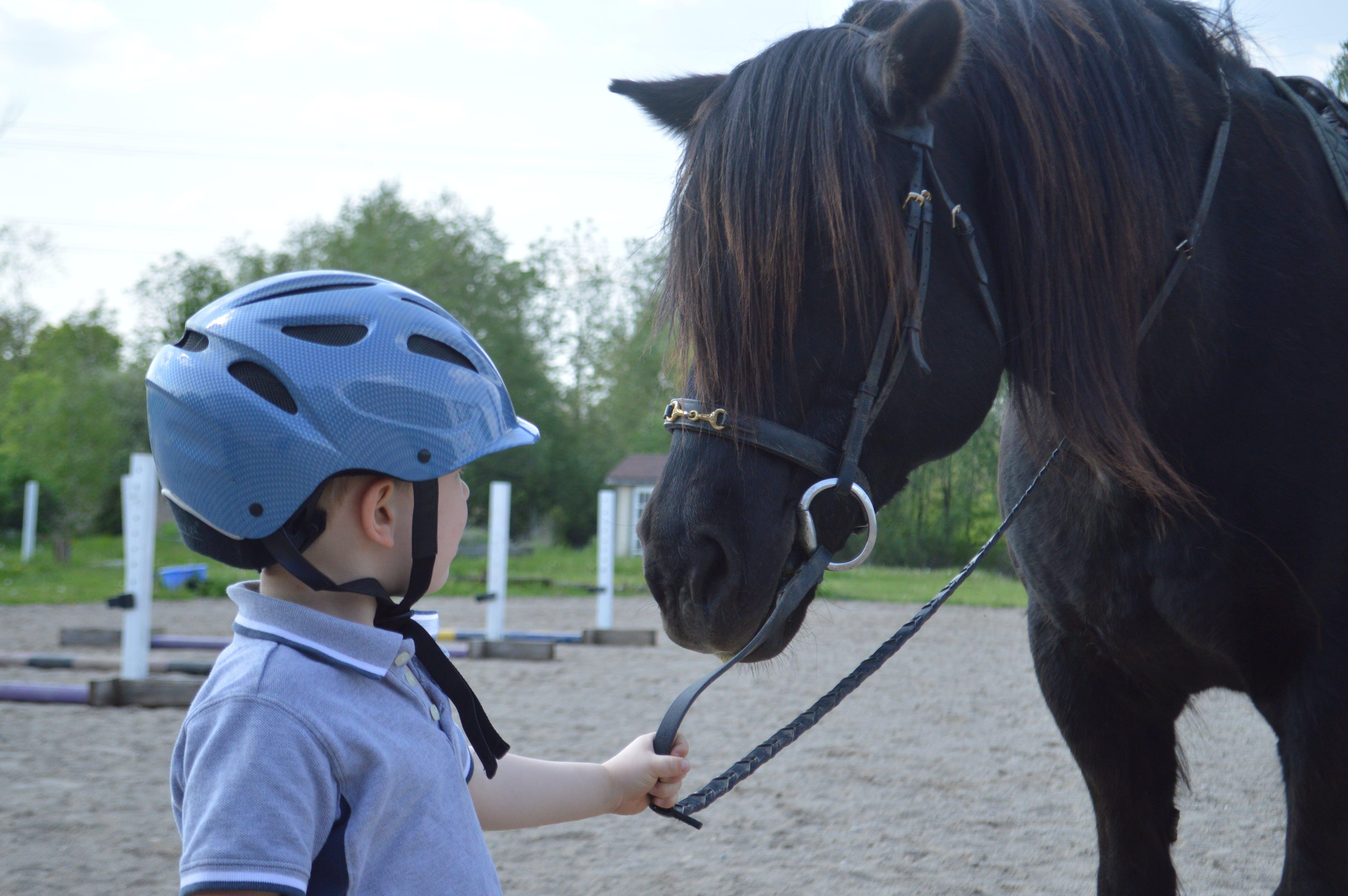 Free stock photo of child, horse, horseback riding