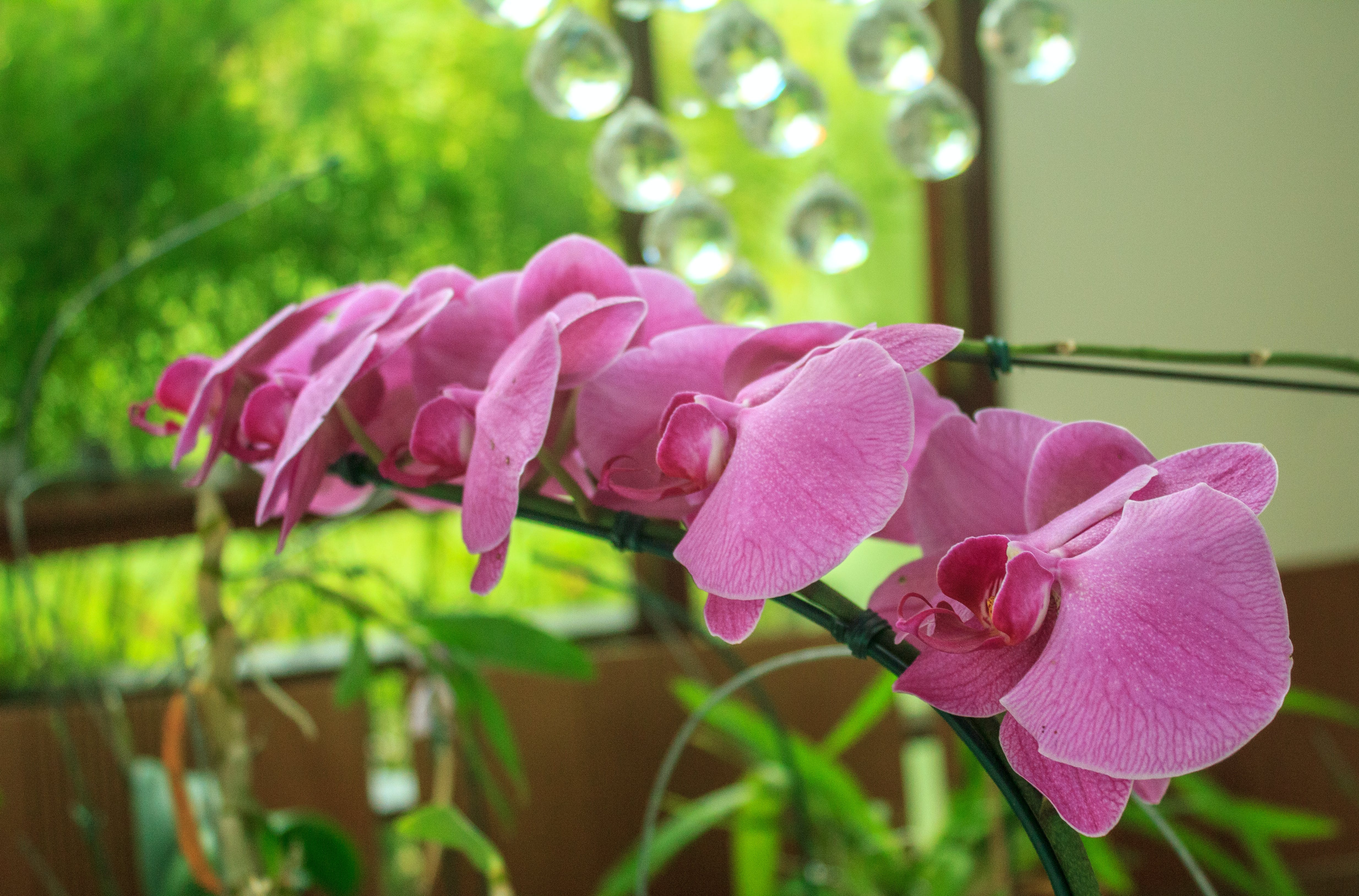 Free stock photo of orchid, beautiful flowers, lilac orchid