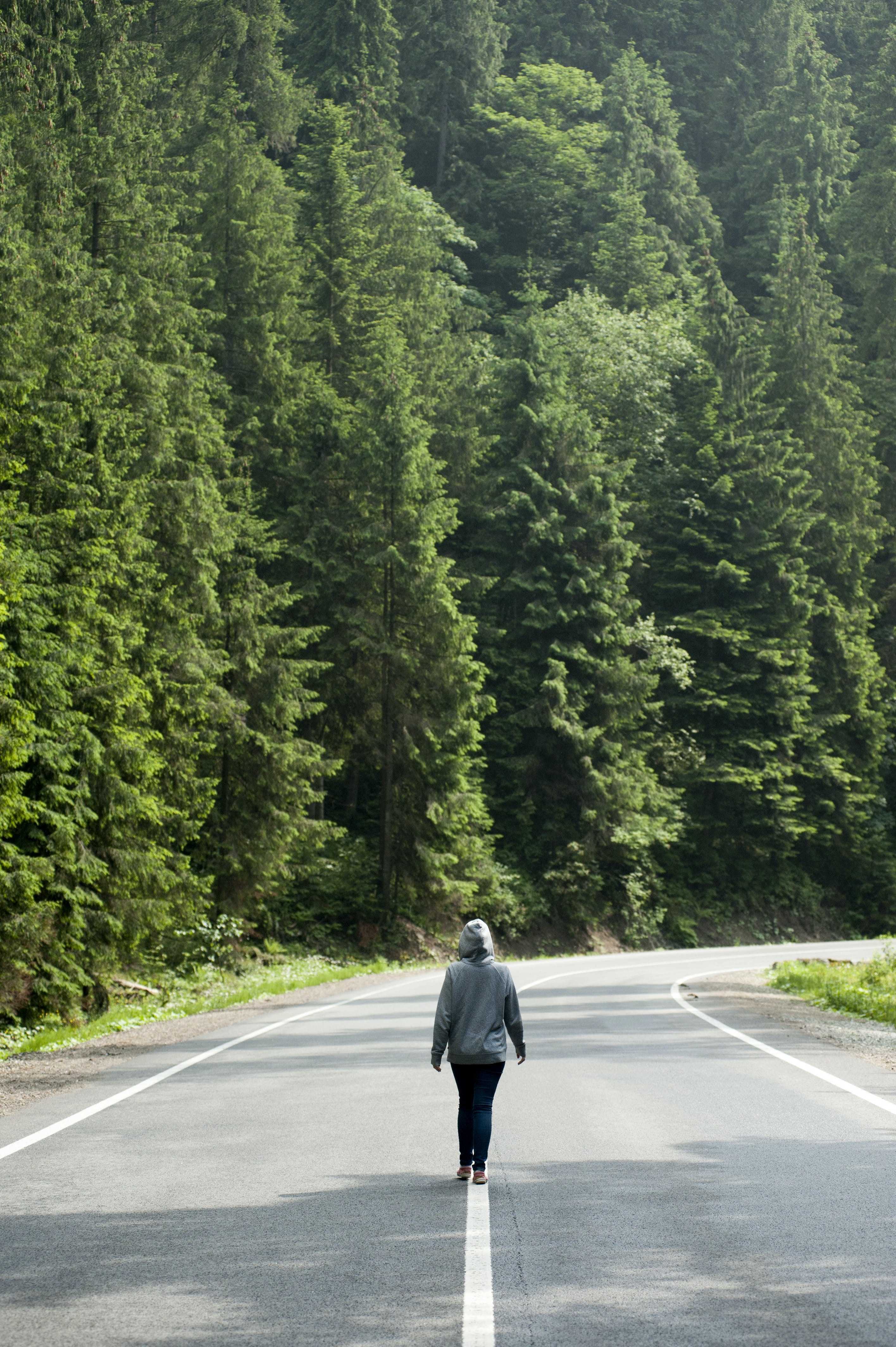 Person Walking on Road Near Trees