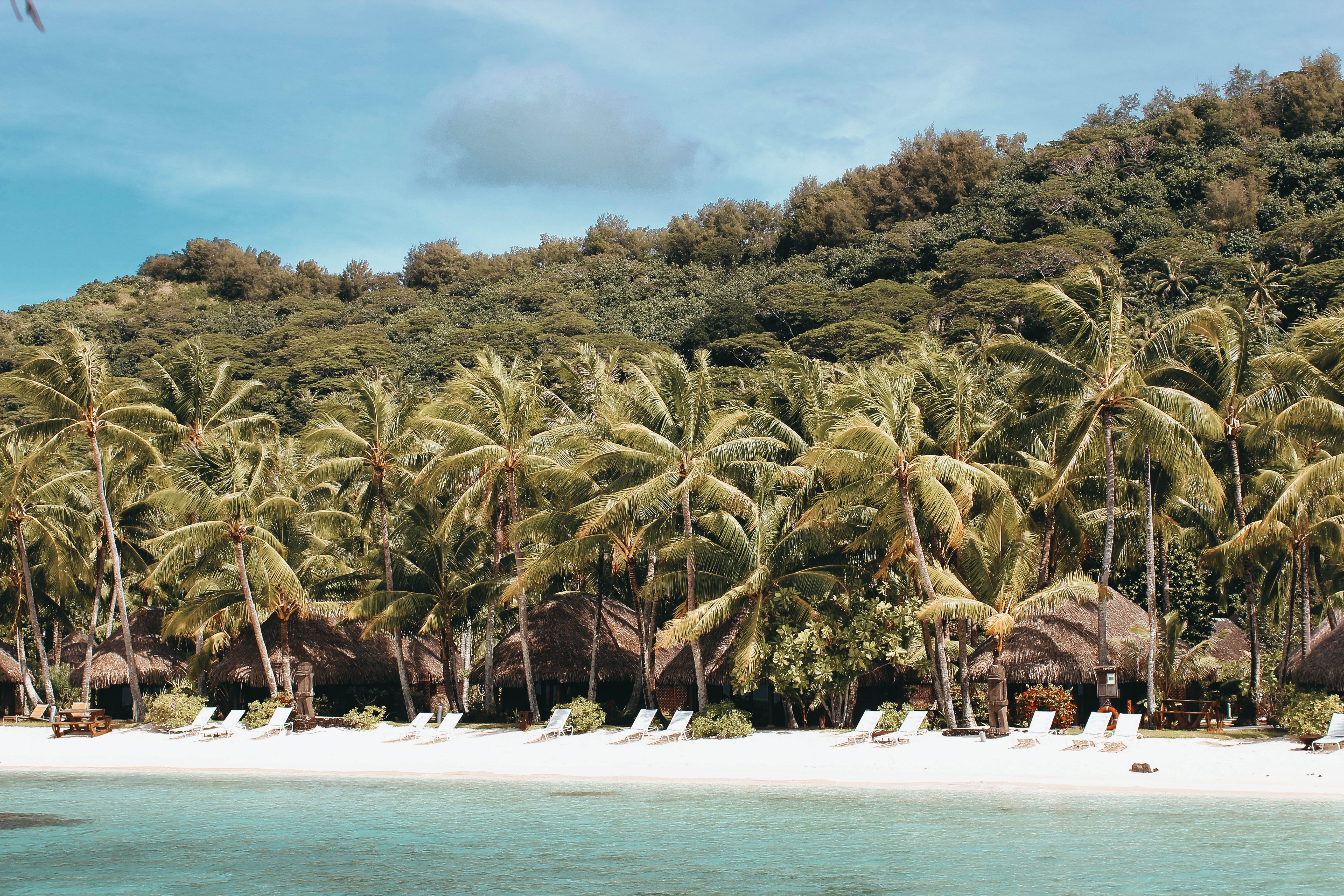 Palm Trees Near Beach Shore Under Sunny Sky