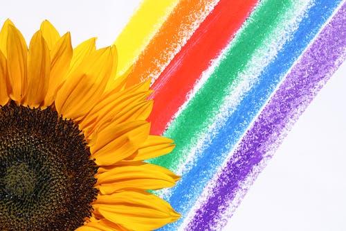 Foto profissional grátis de alegre, amarelo, arco-íris, arredondar