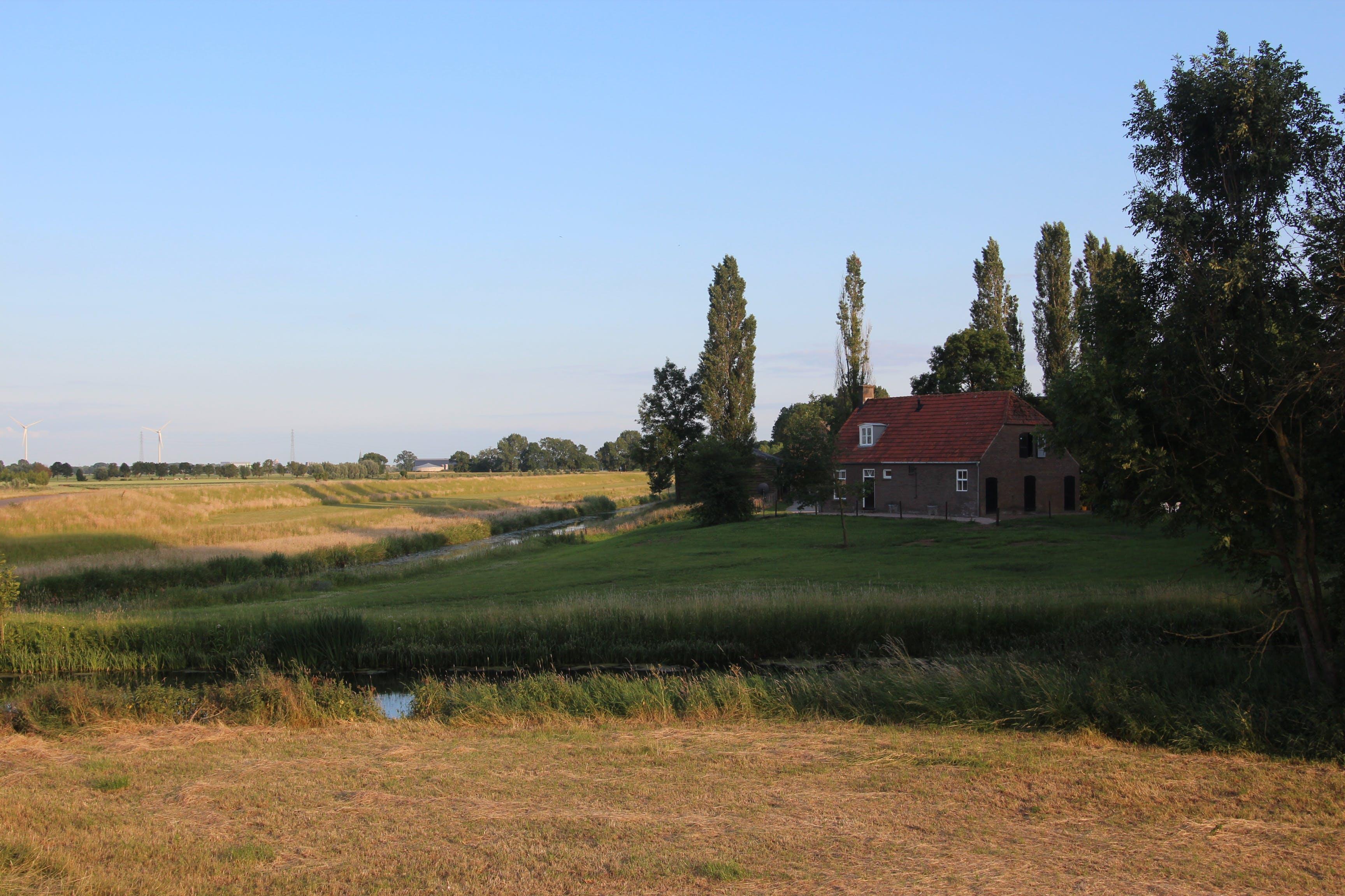Free stock photo of blue, farm, gold, grass
