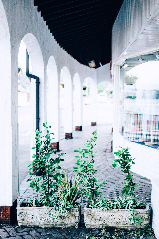 Green Leafed Plants on Hallway