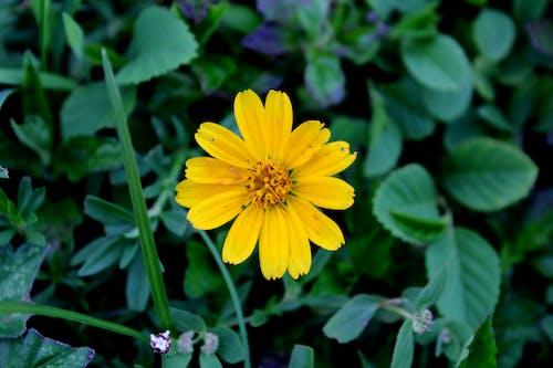 꽃, 노란색, 만, 바닥의 무료 스톡 사진