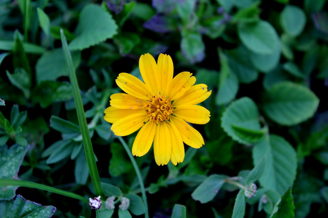 꽃, 노란색, 만
