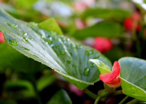꽃, 녹색, 방울, 빨간의 무료 스톡 사진