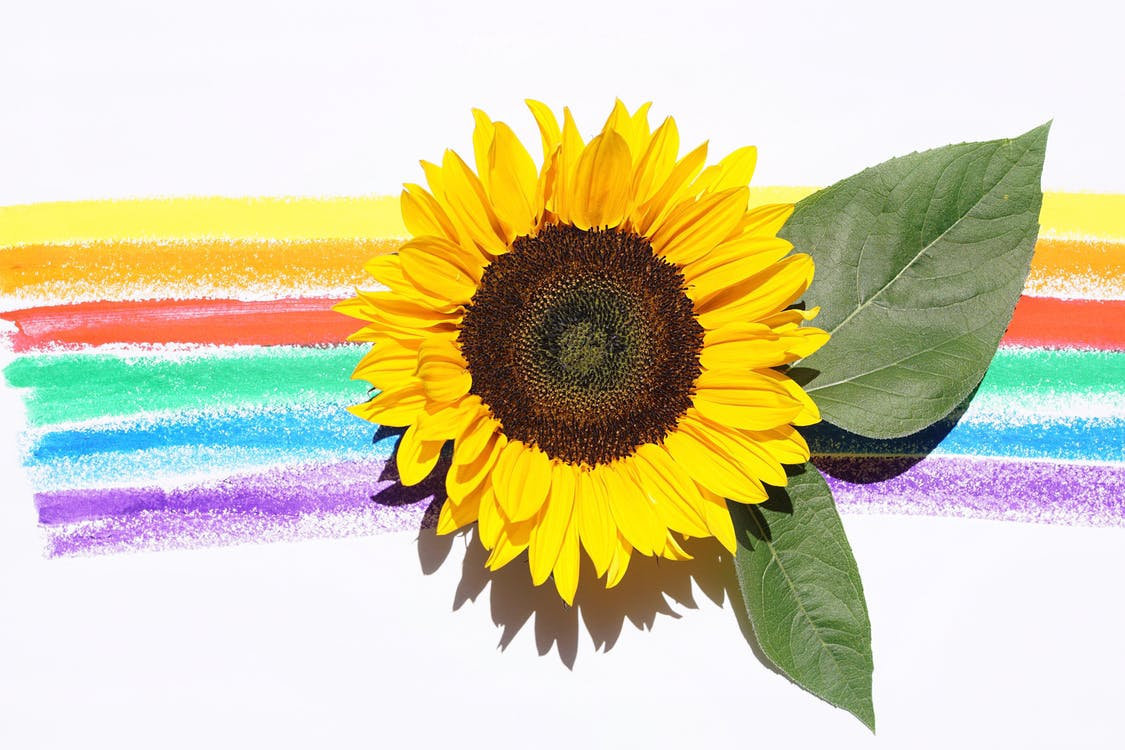 Yellow Sunflower With Leaves