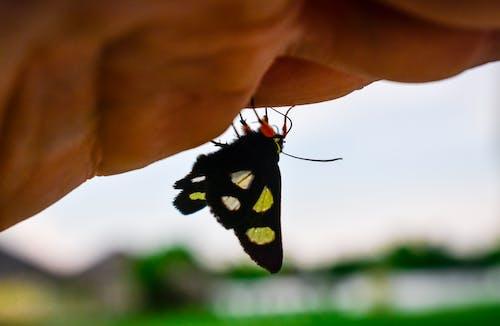 Photos gratuites de dehors, faune, gros plan, insecte