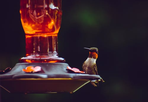 Selective Focus Photography of Ruby-throated Hummingbird Perched on Bird Feeder