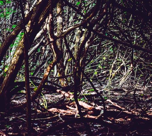 Photos gratuites de arbres, bois, dehors, léger