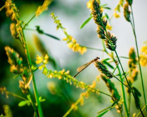Ảnh lưu trữ miễn phí về cận cảnh, cánh, cỏ, con chuồn chuồn