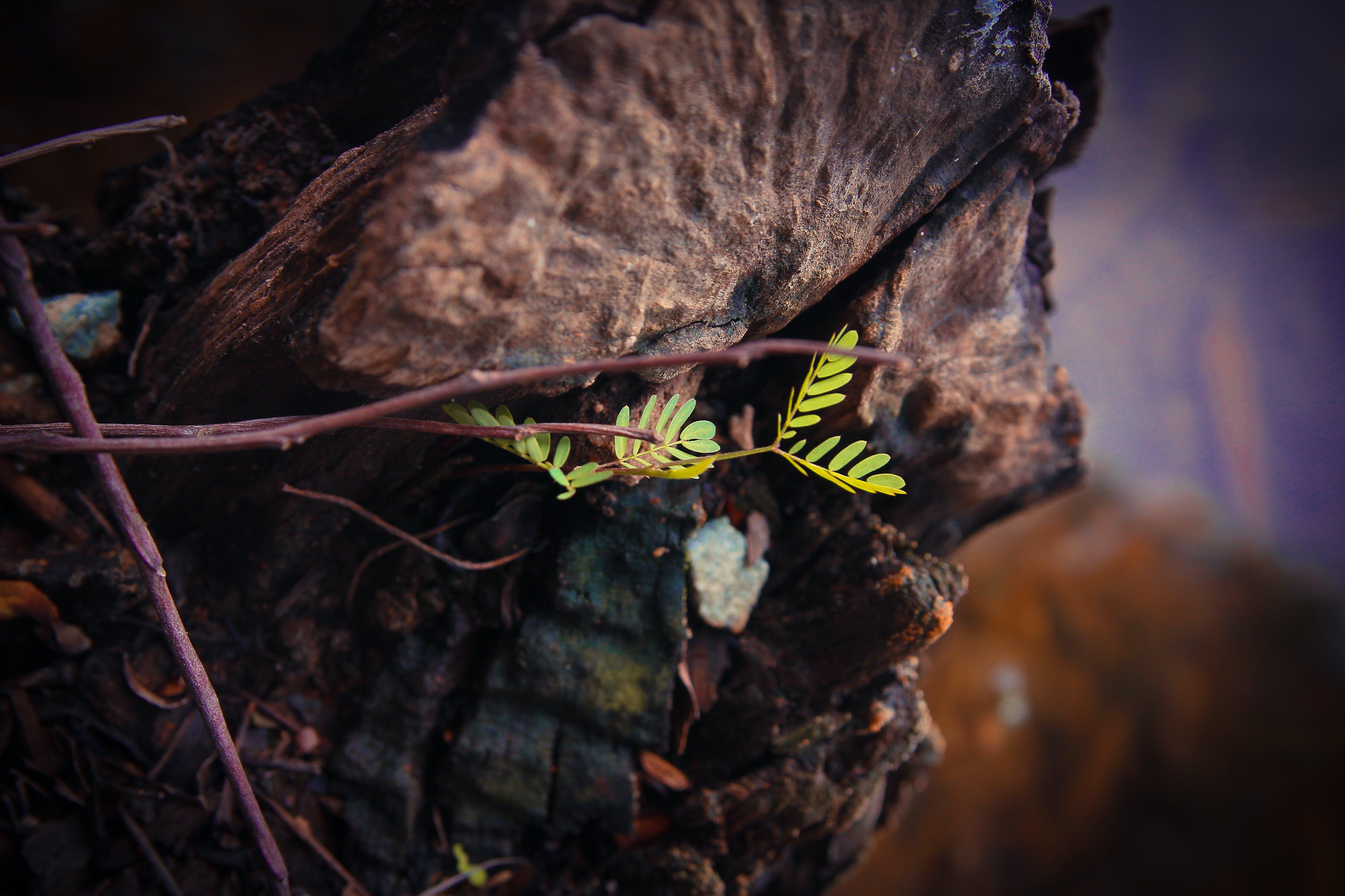 Základová fotografie zdarma na téma #les, #strom, přírodní, rostliny