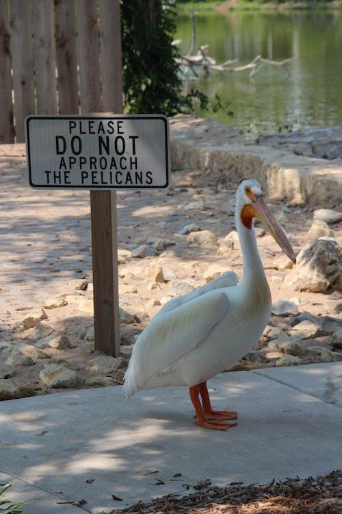 do not feed, humor, pelican