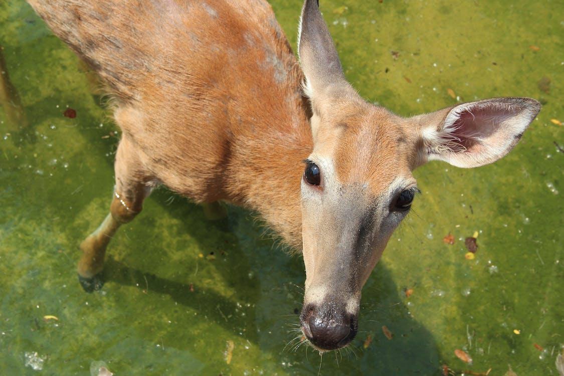 animal, deer, wildlife