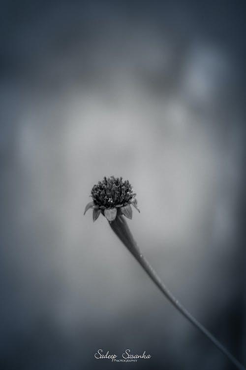 天性, 斯里蘭卡, 美麗的花朵, 自然公園 的 免費圖庫相片